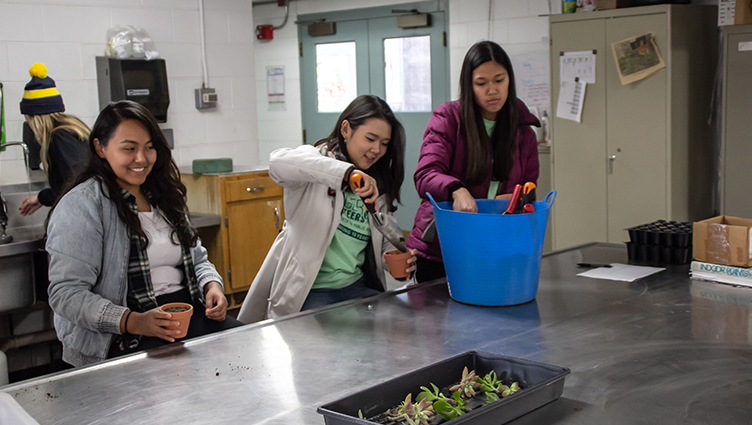 Badger Volunteers learn how to make succulents with the help of Allen Centennial Garden staff on Oct. 13, 2018.
